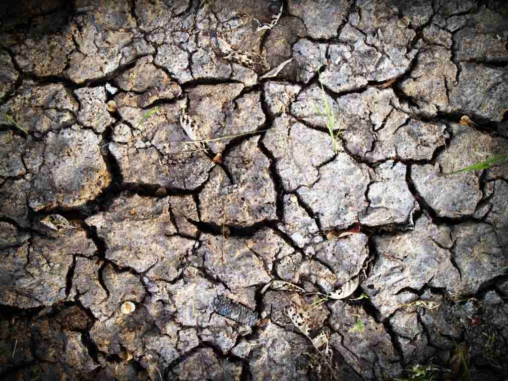 Cracked and backed dry mud with grass and leaves
